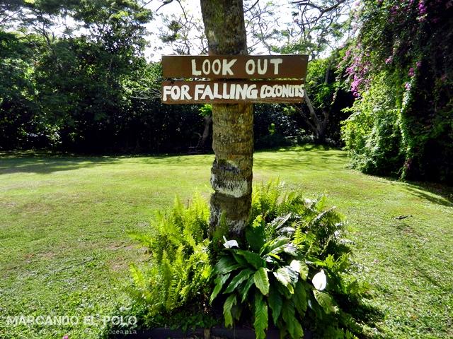 Seguro de viaje: Peligro por caida de cocos en Fiyi