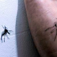 Dengue en el Sudeste asiatico - Mosquito Myanmar