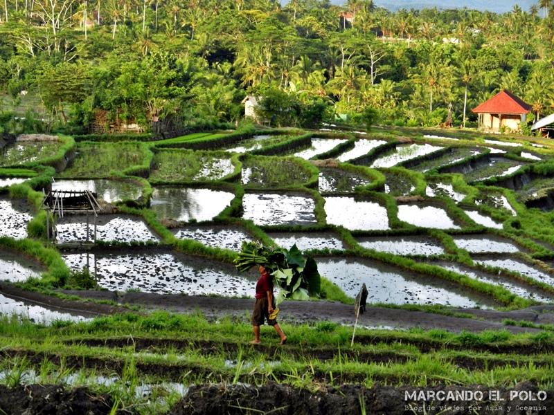 Viajar a Indonesia - Interior de Bali